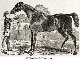Norman horse bis
