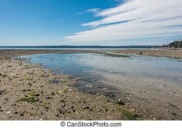 Normandy Park Stream 2