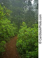 noroeste, floresta tropical, pacífico