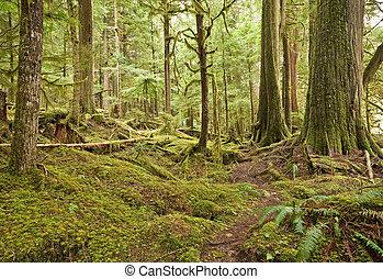 noroeste pacífico, floresta amazônica