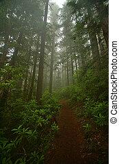 noroeste, pacífico, floresta