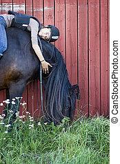 norr, svensk, häst, med, flicka