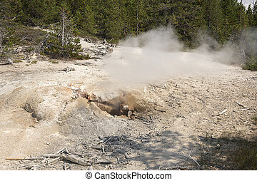 norris geyser back basin in Yellowstone National Park