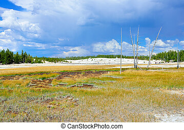 Norris Geyser Basin area in Yellowstone National Park, Wyoming