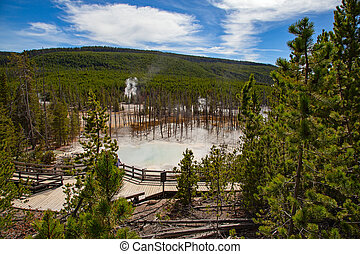 Norris geyser basin in the Yellowstone National park, USA