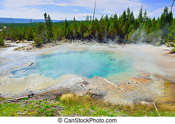 Norris Geyser Basin in Yellowstone National Park, Wyoming
