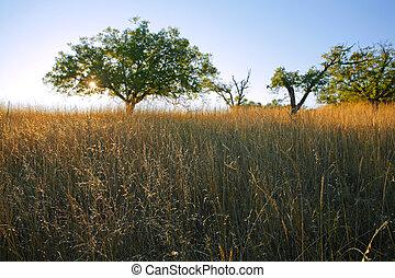 norteño, savanna-like, luz, tarde, california, tarde, prado