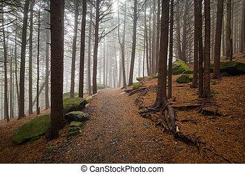 norte, hiking, appalachian, mou, rastro, roan, floresta, ao...