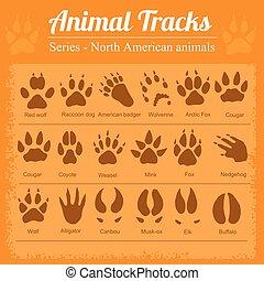 norte, pegadas, -, americano, animal, animais