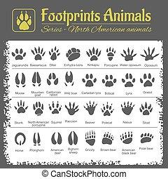 norte, -, pistas, norteamericano, animal, animales