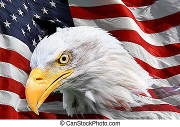 norteamericano, águila calva, bandera