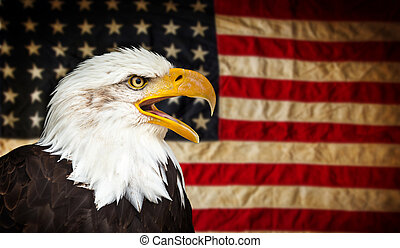norteamericano, águila calva, con, flag.