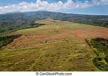 Nortehrn Maui