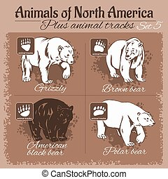 North America animals and animal tracks, footprints.