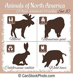 North America animals and animal tracks, footprints. Vector...