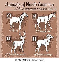 North America animals and animal tracks, footprints.