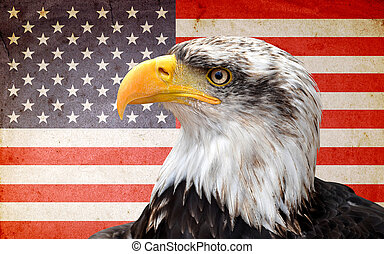 bald eagle - North American bald eagle on American flag