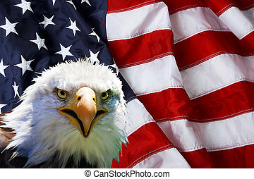 North American Bald Eagle on American flag