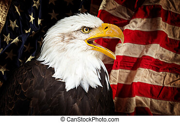 Bald Eagle with American flag.
