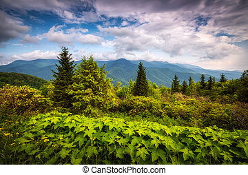 North Carolina Appalachian Mountains Mount Mitchell Scenic Landscape Photography