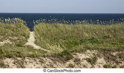 North Carolina Beach Path - A path to the beach on the Outer...
