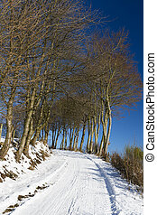 Northern Eifel Dirt Road In Winter, Germany