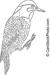 Northern flicker bird - Colaptes auratus - one of the...