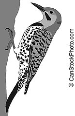 Northern Flicker - male Colaptes auratus Computer painting