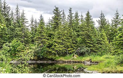 northern landscape and nature in alaska panhandle