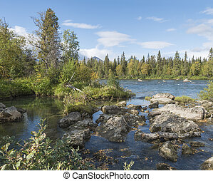 northern landscape with wild glacial river Kamajokk, boulders and spruce tree forest in Kvikkjokk in Swedish Lapland. Summer sunny day