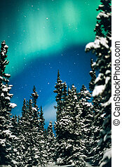 Northern Lights, Aurora borealis and winter forest