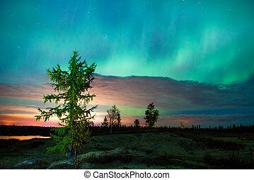 Northern lights (Aurora Borealis) over the tundra
