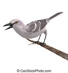 Northern Mockingbird. 3D rendering with clipping path and shadow over white