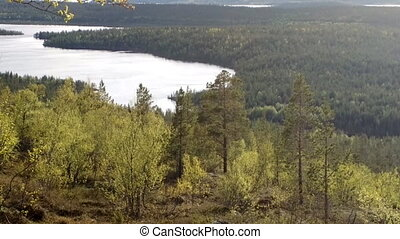 Northern taiga. View jolly green spring forest.