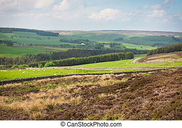 Northumberland landscape - Hilly landscape in Northumberland...