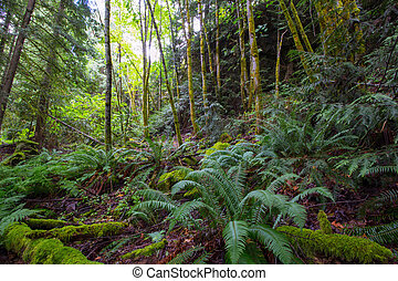 Northwest Forest