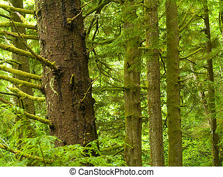 Northwest Rain Forest - Photos of the rain forest at Ecola...