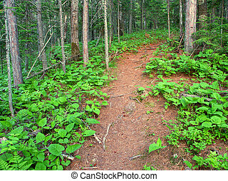 Northwoods Michigan Hiking Trail - Hiking trail winding up a...