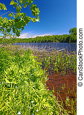 northwoods, wisconsin, lac, paysage