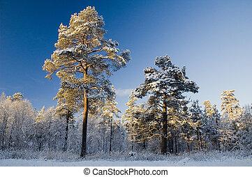 noruega, cena inverno
