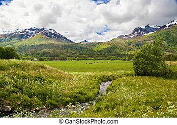 norvégien, été, paysage