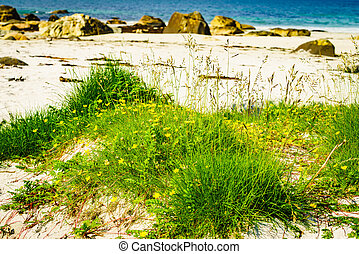 norway, 求助, 海, andoya, 沙, bleik, 海岸, 海滩