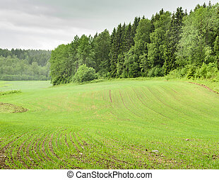 Norwegian agricultural landscape