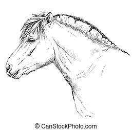 Portrait of horse head in profil (norwegian fjord pony) vector Monochrome hand drawing illustration isolated on white background
