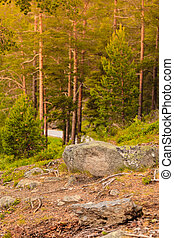 Green forest with coniferous trees