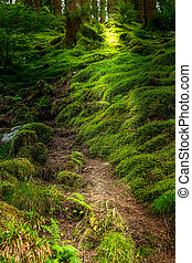 Norwegian troll mysterious forest pathway