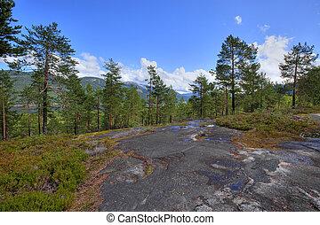 norwegisch, wälder