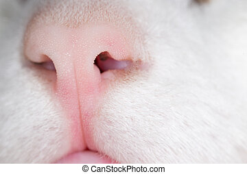 nose., macro, chat