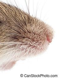 nose., macro, souris