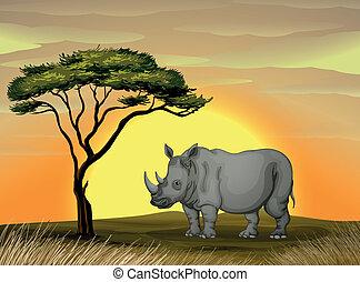 noshörning, träd, under